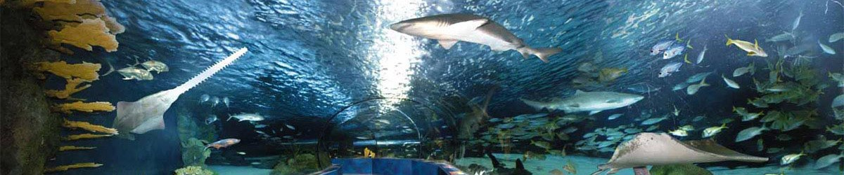 Ripley's Aquarium Vacation Packages in Myrtle Beach, SC